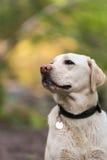 Perro hermoso Imágenes de archivo libres de regalías