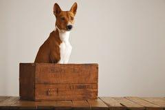 Perro hermoso con una caja de madera vieja Foto de archivo libre de regalías