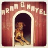 perro hermoso en su caseta de perro Fotografía de archivo libre de regalías