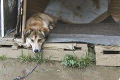 Perro hermoso que descansa en pequeña casa de perro en día de verano caliente Imagen de archivo