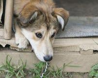 Perro hermoso que descansa en pequeña casa de perro en día de verano caliente Imagenes de archivo