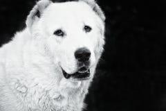 Perro hermoso y de la fuerza imagen de archivo libre de regalías