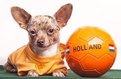 Perro Holanda del fútbol Imagen de archivo libre de regalías