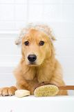 Perro infeliz en el tiempo del baño Fotos de archivo