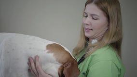 Perro ingl?s del indicador en cl?nica veterinaria Mujer veterinaria con el strethoscope que mira el perro hermoso almacen de video