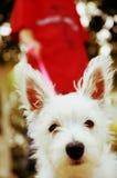 Perro inquisitivo en el correo Foto de archivo