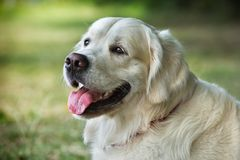 Perro joven de la belleza del retrato Fotos de archivo libres de regalías