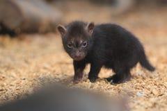 Perro joven del arbusto Foto de archivo libre de regalías