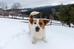 Perro joven divertido en montaña del invierno Imágenes de archivo libres de regalías