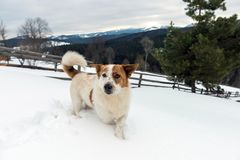 Perro joven divertido en montaña del invierno Foto de archivo