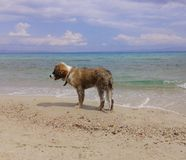 Perro joven hermoso en la playa Fotos de archivo