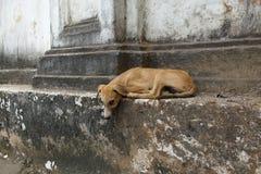 Perro joven lindo, Goa viejo Imágenes de archivo libres de regalías