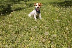 Perro joven lindo que se divierte en un parque al aire libre El tiempo de primavera… subió las hojas, fondo natural Verde Foto de archivo