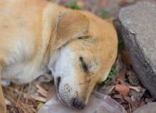 Perro joven que duerme en el montón de basura fotos de archivo
