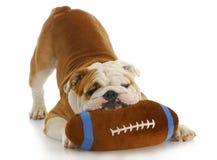 Perro juguetón Fotos de archivo libres de regalías
