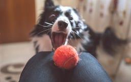 Perro juguetón Imágenes de archivo libres de regalías