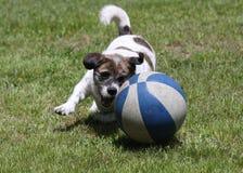 Perro juguetón Imagenes de archivo
