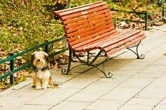 Perro lanudo atado al banco de parque Fotos de archivo libres de regalías