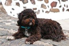 Perro lanudo negro que miente en la calle fotografía de archivo libre de regalías