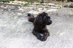 Perro lanudo negro, raza cruzada foto de archivo