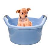 Perro limpio y aseado Fotografía de archivo