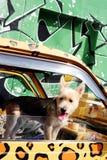 Perro lindo Imágenes de archivo libres de regalías