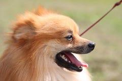 Perro lindo Fotos de archivo