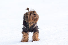 Perro lindo Imagen de archivo libre de regalías