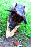 Perro lindo Imagen de archivo