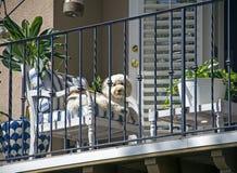 Perro lindo al aire libre en un balcón imagen de archivo
