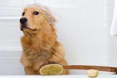 Perro lindo aprensivo sobre un baño Fotografía de archivo libre de regalías