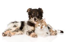 Perro lindo con el gato En el fondo blanco Fotografía de archivo