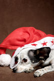 Perro lindo con el sombrero de la Navidad Imágenes de archivo libres de regalías