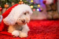Perro lindo con el sombrero de la Navidad Imagen de archivo libre de regalías
