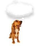 Perro lindo con la burbuja vacía de la nube Fotografía de archivo