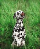 Perro lindo con una mariposa en su nariz -- blurre entonado y radial fotografía de archivo libre de regalías