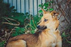 Perro lindo de la Mezclado-raza imagenes de archivo