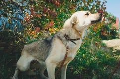 Perro lindo de la Mezclado-raza fotos de archivo libres de regalías