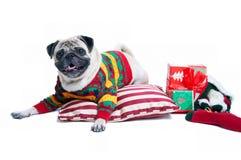 Perro lindo de la Navidad Fotos de archivo