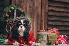 Perro lindo de la Navidad con los regalos y las decoraciones en fondo de madera rústico imagenes de archivo