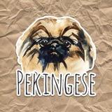 Perro lindo del retrato Ejemplo a mano de la acuarela Perro popular de la raza Diseño de la tarjeta de felicitación pekingese ilustración del vector