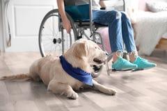 Perro lindo del servicio que miente en piso cerca de muchacha en silla de ruedas Fotografía de archivo