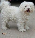 Perro lindo del veterinario Foto de archivo libre de regalías