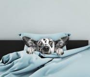 Perro lindo el dormir Foto de archivo libre de regalías