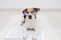 Perro lindo elegante que miente con el libro abierto en lentes imagen de archivo