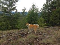 Perro lindo en bosque imágenes de archivo libres de regalías