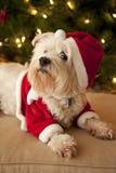 Perro lindo en el traje de Santa Imágenes de archivo libres de regalías