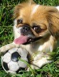 Perro lindo en la hierba fotos de archivo libres de regalías