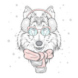 Perro lindo en orejeras y una bufanda Fotos de archivo libres de regalías