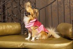 Perro lindo en ropa rosada de una manera Foto de archivo libre de regalías